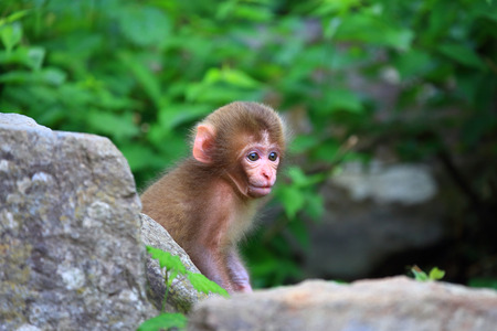 Cute little baby monkey Stock Photo