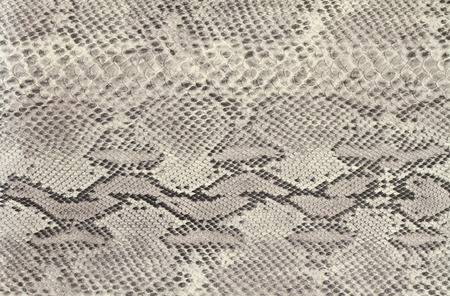 Background snake skin
