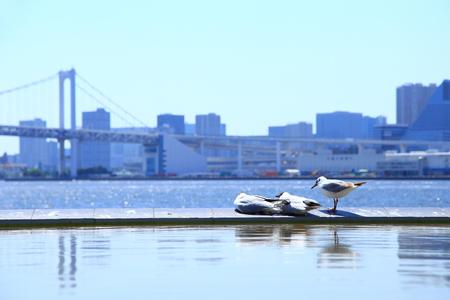 Seagulls with Tokyo Skyline