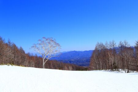 One tree in the winter ski resort