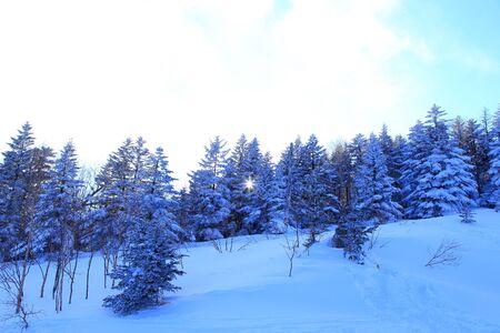 Snow covered trees in ski resort