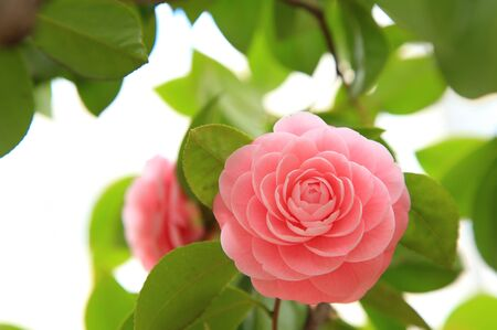 Beautiful pink flower in spring