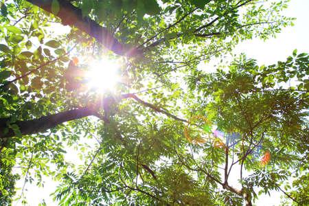 Strong sunlight in summer
