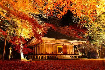 紅葉寺のライトアップ