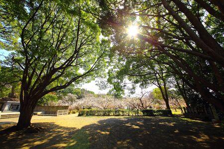 sunbeams: Sunbeams Stock Photo