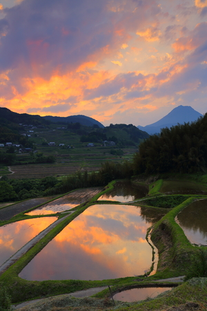 Rice paddies at dusk