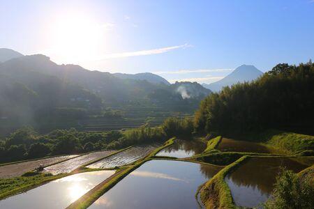 paddies: Rice paddies at dusk