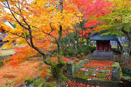 Autumn leaves of Hikosan