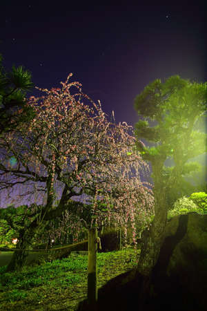 lightup: Weeping plum light up