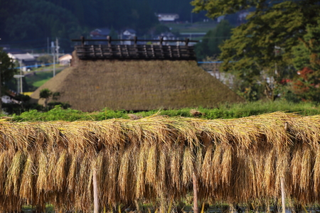 Thatched-roof & Sun-dried Stock Photo