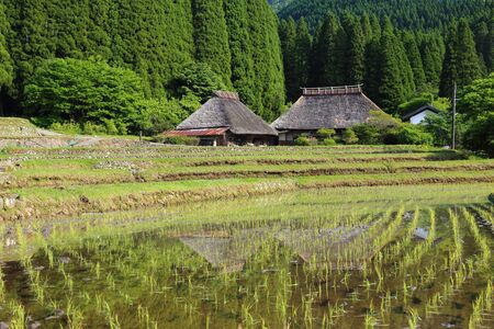 Rice paddies and thatched-roof