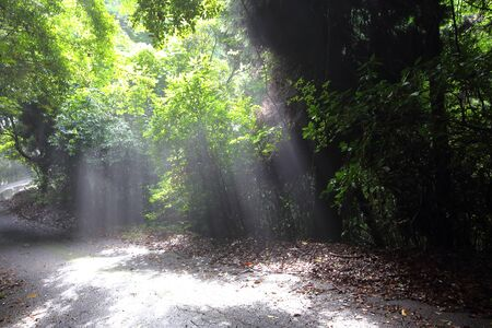 Beam of light in the forest
