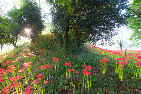 Higan Flowers of the Nanatsumori Kofun Group