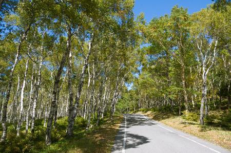 uncompahgre national forest: Birch road.plateau drive