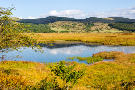 wetlands: Wetlands of the plateau in Japan.Yellow grass. Stock Photo