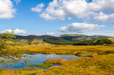 wildlife refuge: Wetlands of the plateau in Japan.Yellow grass. Stock Photo