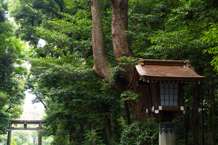 mystic place: Japanese lanterns in the forest.