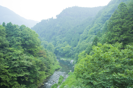 japanese ethnicity: Calm river running through wild forest Stock Photo