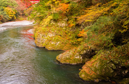 Autumn leaves and river in the mountains. Stock Photo