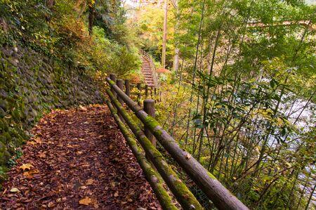 Autumn leaves. Hiking Trail.