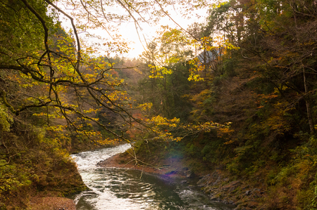 cascade range: Sunlight.Autumn leaves and river in the mountains.