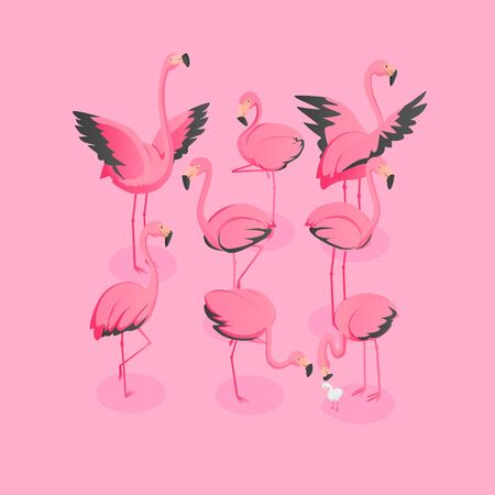 Isometric View Of Flock Of Flamingos