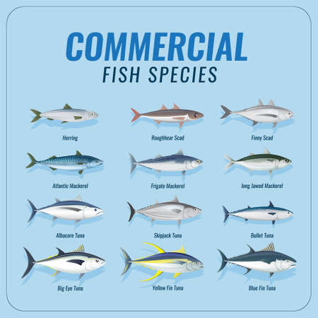 commercial fish species collection set Vettoriali
