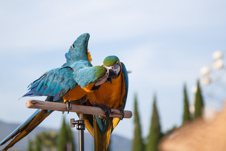 births: lovely couple parrot