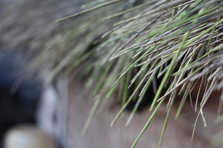 thatch: Thatch roof  Stock Photo