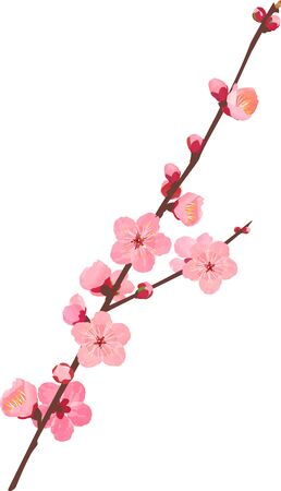 The branche of plum blossoms