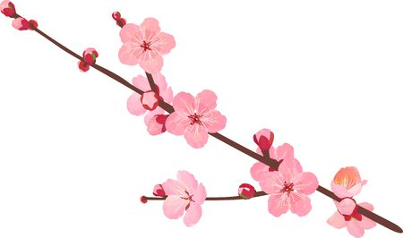 The branche of plum blossoms Stock Vector - 137531957