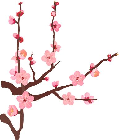 The branche of plum blossoms 04 Stock Vector - 138033437