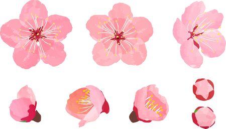 Pflaumenblüten-Teilesatz, Vektorillustration