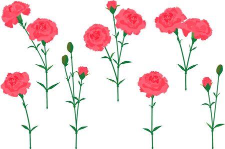Vector illustration of a set of carnations #02 Ilustración de vector