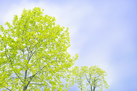 peacefulness: Blue skies and green