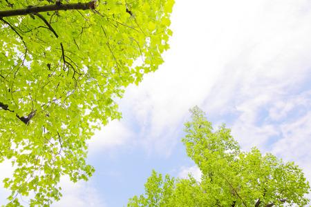 cielos azules: Cielos azules y verde