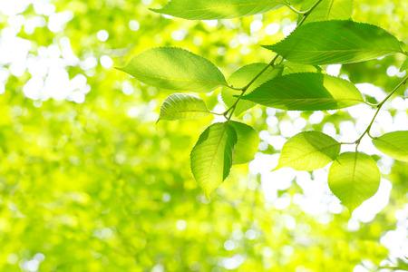 peacefulness: Fresh green