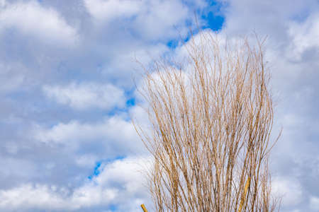 Blue sky, clouds and leaves fallen trees