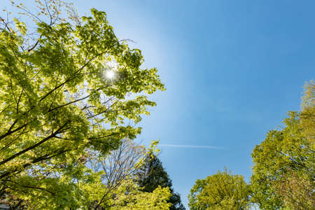 Blue sky and fresh green trees