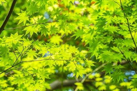 Fresh green leaves background.
