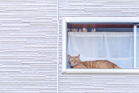 The cat staring at through the window