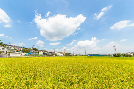 Paddy fields in residential areas 写真素材 - 150748807