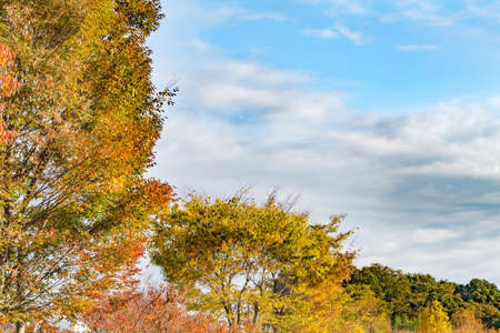 Autumn sky and autumn leaves