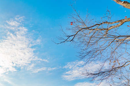 Autumn sky and leafy trees