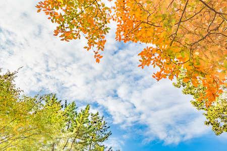 leaves that have begun to color orange 免版税图像