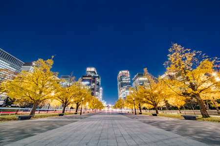 A row of ginkgo trees and buildings in the city Archivio Fotografico