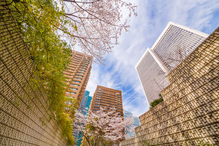 Urban building and cherry tree