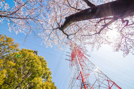 Cherry blossoms and towers in full bloom