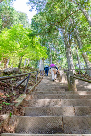 people climbing the stairs of a trail