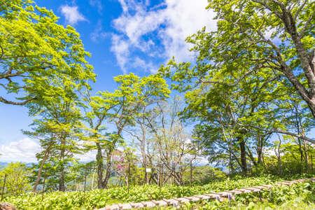 Wooden path in fresh green